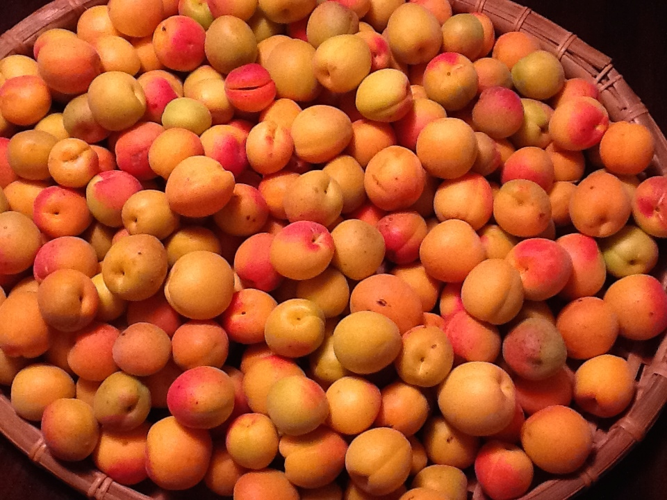 Apricots in Beachwood Canyon, Past and Present